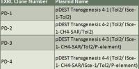 p4 Plasmids